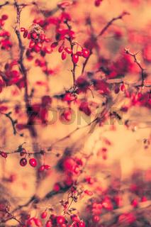 Vintage autumn abstract background, nature fine art