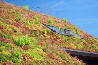 begrüntes Dach, Deutschland