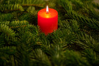 Christmas motif with red burning candle surrounded by Nordmann fir branches