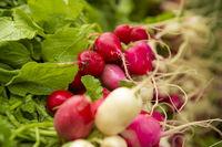Organic Radishes