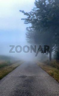 Foggy countryside road