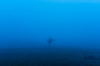 Single bare tree in the glowing blue fog