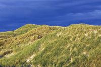 Sandduenen im ersten Morgenlicht an der Daenischen Nordseekueste / Sand dunes in first morning light on the Danish North Sea coast / Syddanmark  -  Daenemark