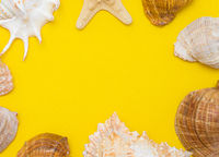 Seashell layout a yellow background. Vacation banner with place for text. Summer. Hello summer. Shell on a yellow background.