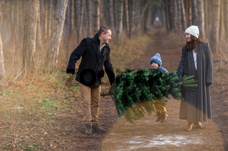 Cheerful couple with kid carrying spruce tree in woods