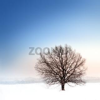 winter bare tree