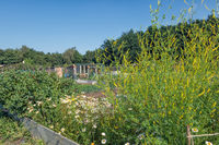 Dutch allotment garden with meliot plant and vegatables