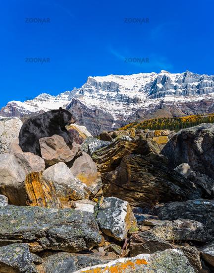Black bear rests on a the stony bank