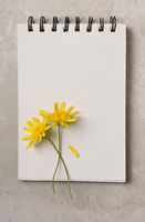 Two Yellow Daisy like flowers on a blank page of a spiral bound notebook. Flat lay with copy space.