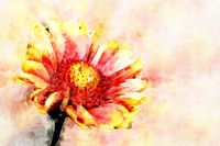 Red Helenium flower close-up on green grass background. Stylization in watercolor drawing.