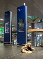 Dog in the station