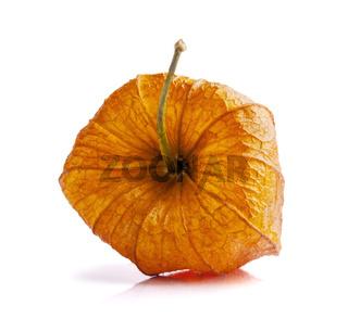 Orange physalis on white background
