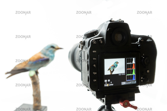 The camera has the image of a bird with a histogram on the display isolated on white