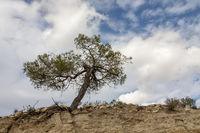 Im Troodos-Gebirge, Zypern