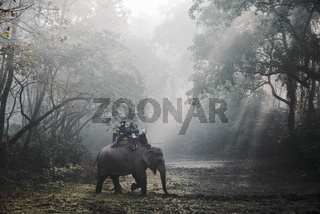 Elephant safari in Chitwan, Nepal