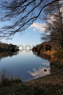 autumn landscape fallen leaves trees and clouds reflected in the water