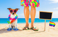 gay pride dog and owner on   summer holidays