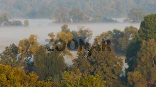 Aussicht vom Turm der Wallwitzburg bei Dessau über Bäume im dichten Nebel am Morgen im Herbst