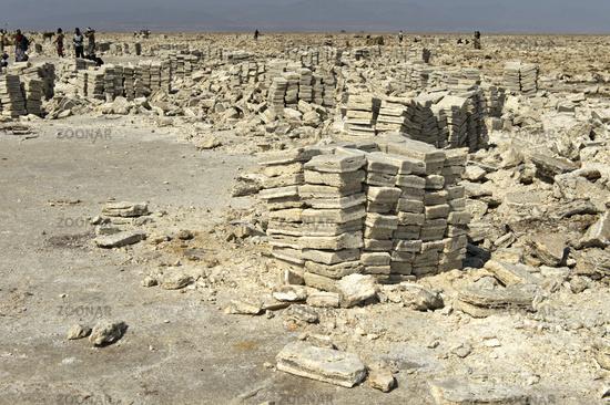Hewn salt slabs are ready for loading onto dromedaries,Danakil Depression, Afar Region, Ethiopia