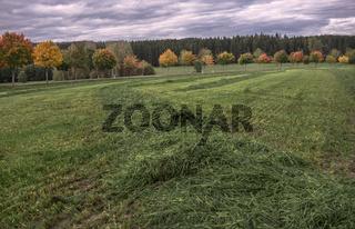 Frisch gemaehte Herbstwiese