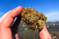 Pressed dried cannabis. A clump of dried marijuana in hand in the sunlight in open air.