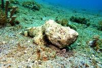 Flasher Scorpionfish, Humpback Scorpionfish , Rough Humpbacked Scorpionfish