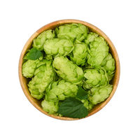Wooden bowl of fresh green hops isolated on white