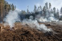 Big field with smoke after wildfire. All grass and trees are burnt after forest fire or forestry works.