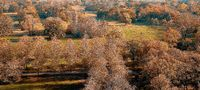 Aerial view of Rotehorn city park in Magdeburg in autumn
