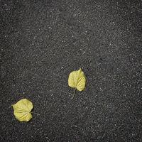 fallen autumn leaves on pure asphalt
