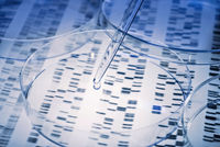 DNA mit Pipette und Petrischale