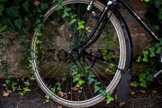 Fahrrad mit Efeu