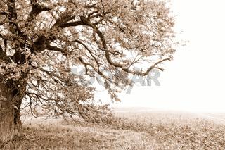 der Herbst im Wald und Flur sepia