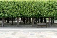 Linden hain in the Weilburg Palace Garden
