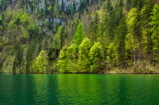 Green trees reflecting in lake. Königssee