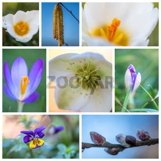 Frühlingsstimmung Collage mit Blüten