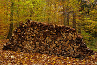 wood stack in the autumn forest