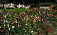 monastery garden with flowers, germany, swabian alb