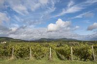 Blick über die Weinberge auf den Pfälzerwald