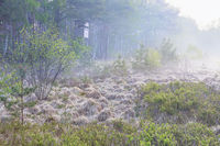 misty morning in forest