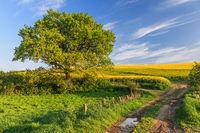 Feldweg durch Landschaft mit Weizen- und Gerstenfeldern