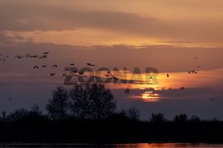 Sunrise landscape of Hortobagy landscape, Hungary