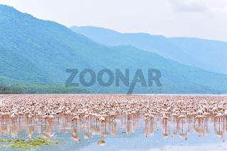 Flamingos in Afrika