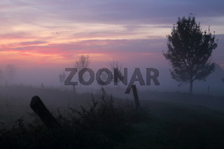 Morgengrauen im Havelluch, Brandenburg