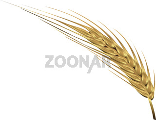Spica of wheat vector illustration