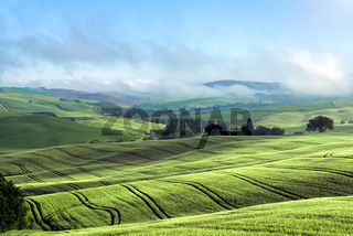 Rolling Hills of Val d'Orcia Tuscany