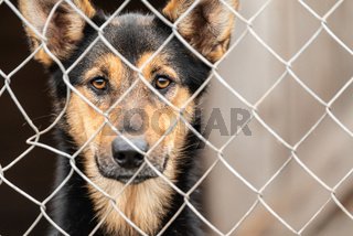 Homeless dog in a shelter for dogs