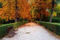 Scene of the Buen Retiro Park in Madrid during the fall with vibrant colors