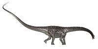 Diplodocus dinosaur - 3D render