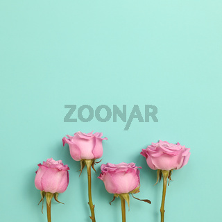 Pink purple rose flowers on mint green background. Floral composition, flat lay, top view, copy space